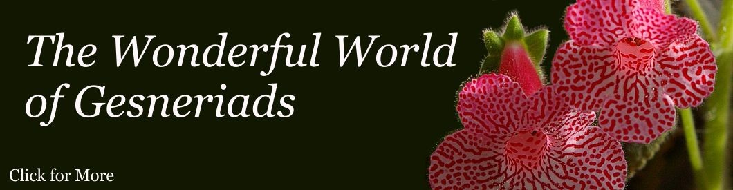 Slide 1_wonderful world